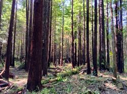 2cb61059_restoration_forestry_smaller.jpg