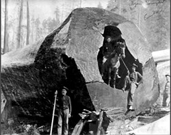 HSU LIBRARY SPECIAL COLLECTIONS - Large log, Ryan Slough, 1904. The area is now a community forest.