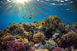 chasing-coral1.jpg