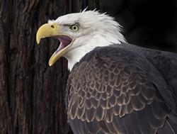 sequoia_park_zoo_sp15-479.jpg