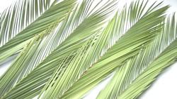3824ab25_palms.jpg
