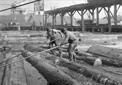 """Pond monkeys"" in the Hammond Lumber Company mill pond. Photo Credit: Humboldt County Historical Society."