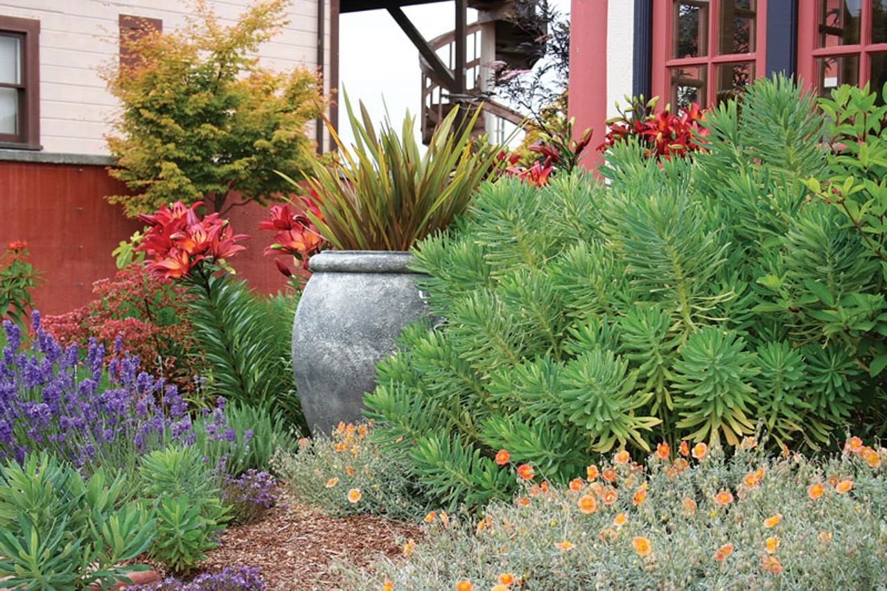 Go mediterranean down and dirty north coast journal - Mediterranean garden plants colors and scents ...