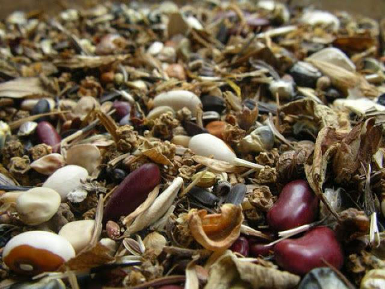 Sowing Seeds of Sustainability | Down and Dirty | North Coast Journal
