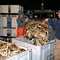 People of the Crab Unloading fresh-caught crab at Caito Fisheries. Photo by Heidi Walters.