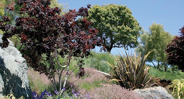 garden_magnum.jpg