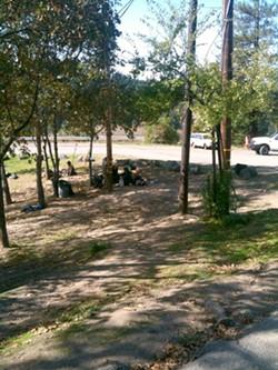 JACOB SHAFER - Veterans Grove in Garberville.