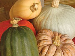 Winter squash. Photo by Simona Carini.