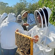 Central Coast beekeepers help preserve colonies and produce 'liquid gold'