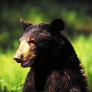 Bears win a reprieve from hunting