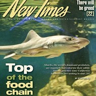 The fin issue