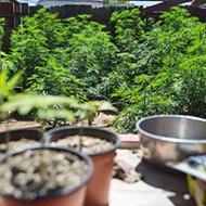 SLO County and SLO city consider medical marijuana cultivation ordinances