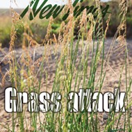 Grass attack: Efforts to manage veldt grass in the Guadalupe dunes go aerial