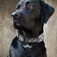 Introducing Mutt Couture: Not your average collar