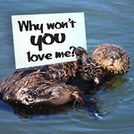 Morro Bay snubs sea otters