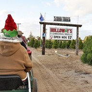 Tree time: Holloway's Christmas Tree Farm in Nipomo is a family tradition