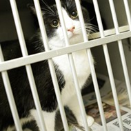 County may euthanize 27 cats by Christmas