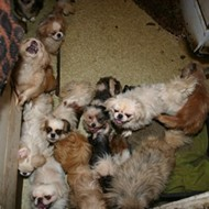 The cost of hoarding animals
