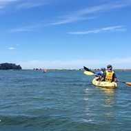 Paddle on: Get out on the Elkhorn Slough and don't worry about sharks