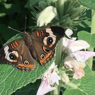 Butterflies Alive! exhibit soars in Santa Barbara