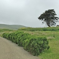 A little piece of Harmony: Harmony Headlands State Park is worth the while