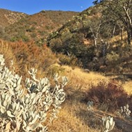 Discovering the tucked-away American Canyon trail in Los Padres National Forest
