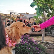 Bang the Drum Brewery's Puppy Love night drew support for Woods Humane Society