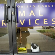 County, North County cities renew animal shelter discussions