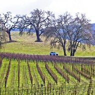 Wine grape values hit record high, labor shortage hurts vegetables in 2017 SLO crop report
