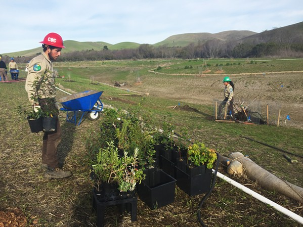 NATIVE PLANTS A crew of California Conservation Corps workers (pictured) helped plant more than 1,400 native plants at the Chorro Creek Ecological Reserve. - PHOTO COURTESY OF  THE MORRO BAY NATIONAL ESTUARY PROGRAM