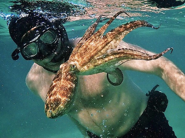 THROUGH HER EYES Craig Foster developed an unusual relationship with an octopus, who helps him see the world in a new light, in this Netflix documentary My Octopus Teacher. - PHOTO COURTESY OF OFF THE FENCE