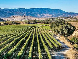 UNIQUE AND DISPARATE With eight designated American Viticultural Areas in Santa Barbara County, the region has a wide range of grape growing regions, wineries, winemakers, and price points. - PHOTO COURTESY OF SANTA BARBARA VINTNERS ASSOCIATION