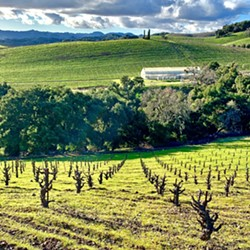 DRY FARM Tablas Creek Vineyard Proprietor Jason Hass said because dry farmed grapes are forced to pull what they need out of the soil, the roots grow deeper, making them more resilient and a better reflection of the terroir. - PHOTOS COURTESY OF TABLAS CREEK VINEYARD
