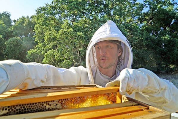 POLLINATORS Beneficial insects, such as the bees Tablas Creek Viticulturist Jordan Lonberg tends, thrive on grapes and the cover crops that grow between vineyard rows. Biodiversity is built into the vineyard's management and is one of the keys to regenerative farming. - PHOTOS COURTESY OF TABLAS CREEK VINEYARD