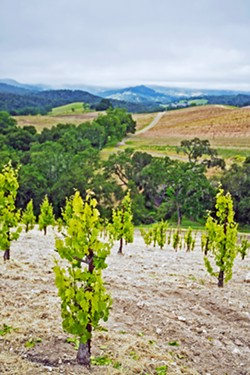 MEASURING IMPACTS A recent Cal Poly study backed by local agriculture says that potential water cutbacks in the Paso Robles Groundwater Basin could cost thousands of local jobs. - FILE PHOTO BY KAORI PETERS
