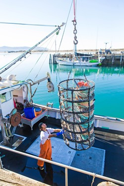 GEAR CONTROVERSY Dungeness crab fishermen say they oppose new legislation that would mandate ropeless gear because it's not effective and it's overpriced. - PHOTO BY JAYSON MELLOM