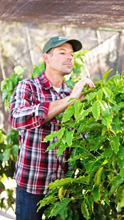 AVOCADO/COFFEE Third-generation avocado grower Andrew Houghtaling used his connections and farming know-how to help start a new kind of coffee company in California. - COURTESY PHOTO BY SCOTT STEVENSON