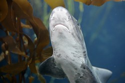 AB-shark.jpg