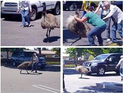 Emu0.jpg