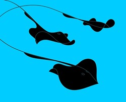 STINGRAYS :  A stingray seems to consist of a single elegant flourish, in this minimal graphic illustration by Mignon Khargie.