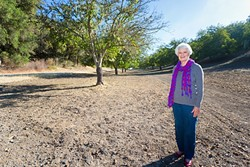 MOVING ON:  Alison Denlinger formed the Adelaida Area Association a decade ago when the winery next door to her, Opolo Vineyards, began expanding. Denlinger eventually sold her property to the owners of Opolo, including this swath of walnut trees. - PHOTO BY KAORI FUNAHASHI