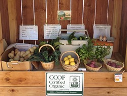 GET PICKY :  Branch Mill Organic Farm operates a food stand where customers can take their pick of produce and leave their money in a cash box. - PHOTO COURTESY OF BRANCH MILL ORGANICS