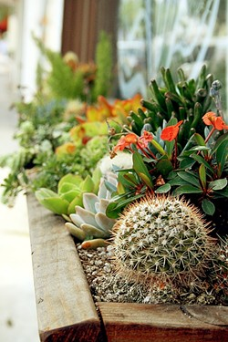 GREEN VIBES:  Whether sprouting from an upcycled file cabinet or potted in a traditional flower box, succulents and cacti can add a pop of water-conscious color to your patio, backyard, or living room. - PHOTO BY HAYLEY THOMAS