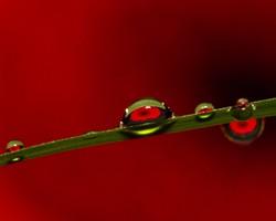 DAISY DEW DROPS: - PHOTO BY DANIEL QUINTANA