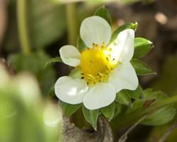 cuisine-flower-5-23.jpg