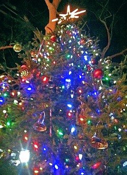 O TANNENBAUM :  A 20-foot cedar tree planted in September will be decorated and then relocated after the holiday due to complaints that it's blocking views of the mission. - FILE PHOTO BY GLEN STARKEY