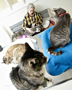 THE CATS MEOW :  North County Humane Society volunteer Jean Cox, who for the past four years has visited Atascadero's Parfitt Adoption Center two or three times a week to care for its cats, provides a lap and love to abandoned cats - PHOTO BY STEVE E. MILLER