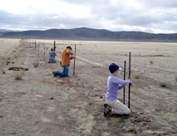 DON'T FENCE ME IN :  Barbed-wire fences create obstacles for the fleet-footed pronghorn that can run but not jump, so volunteers have been busy removing or modifying fences on the Carrizo so pronghorn can pass under them more easily. - PHOTO COURTESY OF CRAIG DEUTSCHE