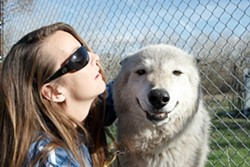 COMPANIONS :  W.H.A.R-Wolf Rescue President Kristi Bluhm-Krutsinger, here with a full-breed wolf Kiowa, says a key to caring for wolves is letting them know you're part of their community. - PHOTO BY STEVE E. MILLER