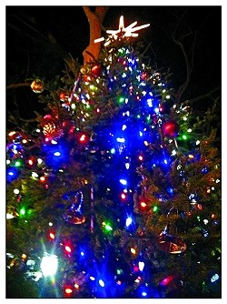 O TENNENBAUM! :  Check out the towering Royal fir in Mission Plaza. It's extra lovely at night!